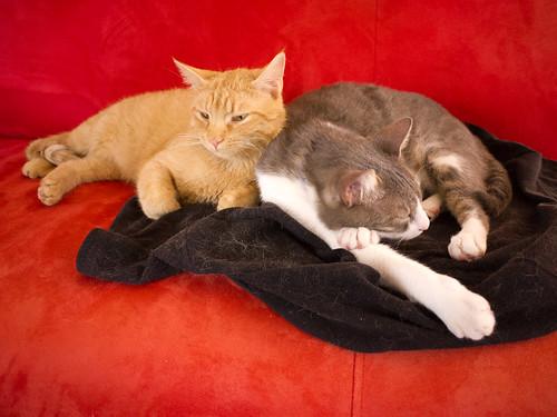 New Cats 157.jpg