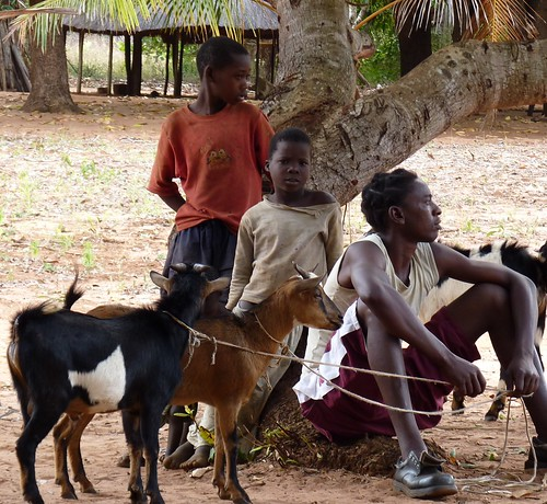 Selling goats in Mozambique