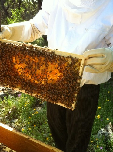 Bees at Marriott