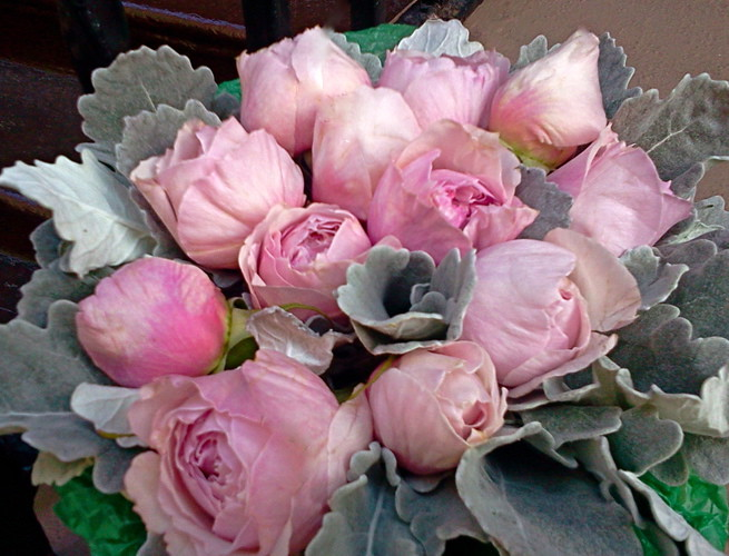 rosalind-5