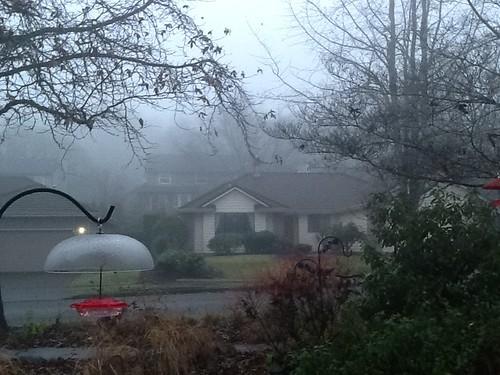 A Foggy Northwest Day