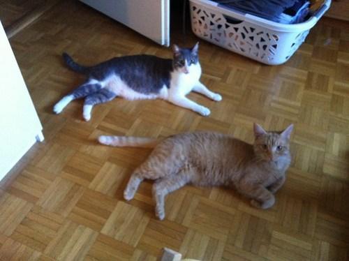 New Cats 197.jpg