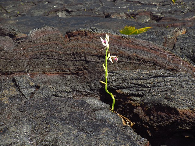 flower in lava