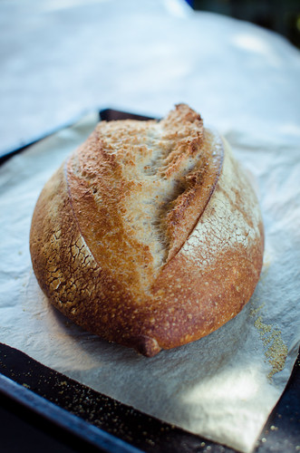 Wholemeal Sourdough