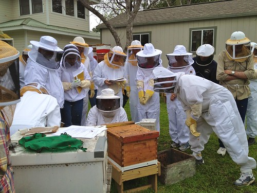 Learning to close the hive entrance