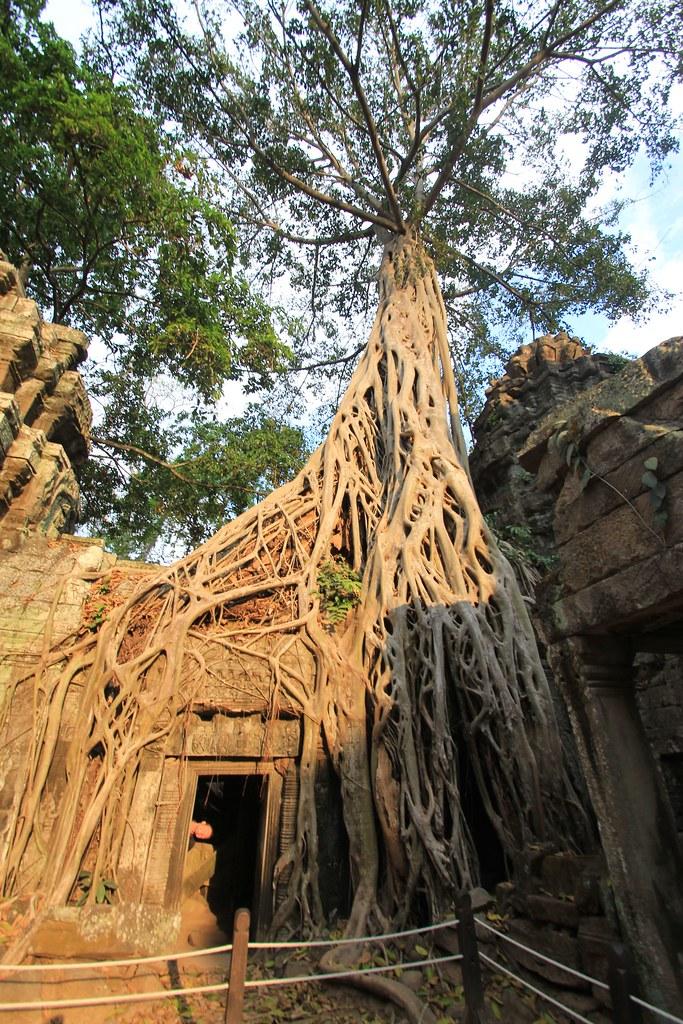 Ta Prohm - Siem Reap, Cambodia
