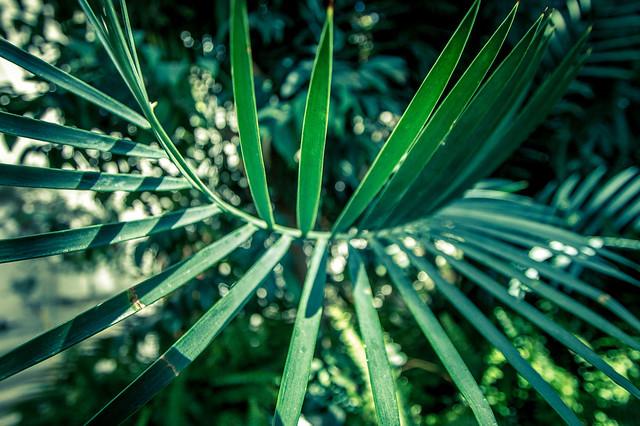 Botanisk hage #01
