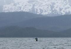 Whale- Juneau 2698 cu