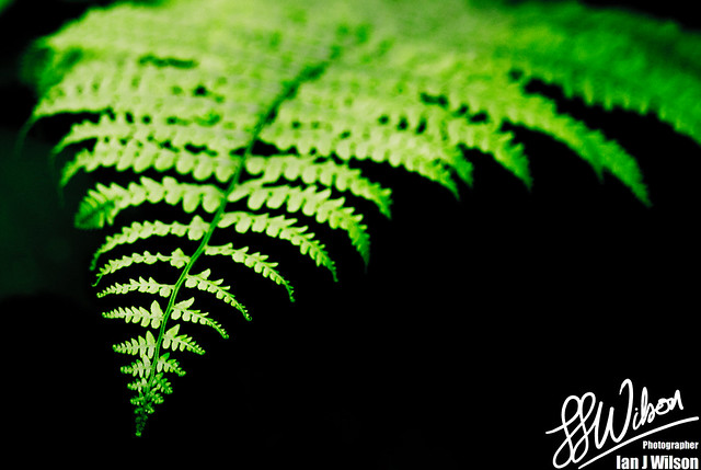 Ferntastic – Daily Photo (8th August 2012)