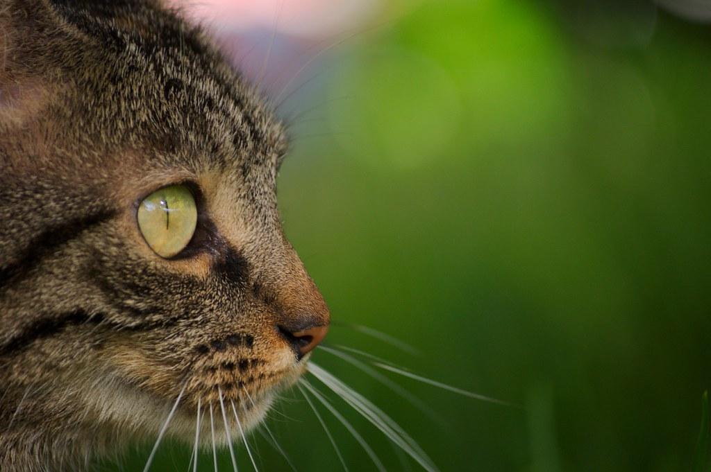 Jeremy's Cat
