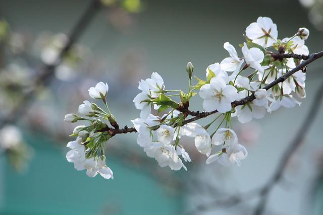 Spring Arrives! (1/6)