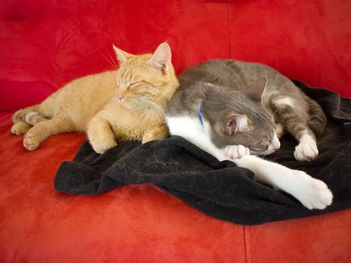 New Cats 158.jpg