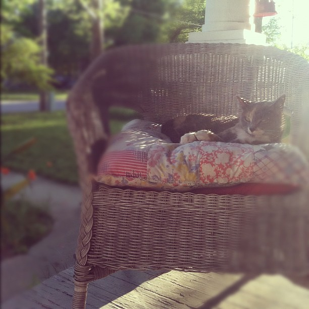 porch kitty.