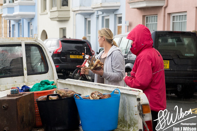 Fresh Crabs – Daily Photo (1st November 2012)