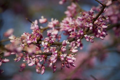Spring 2012 Lombard, IL