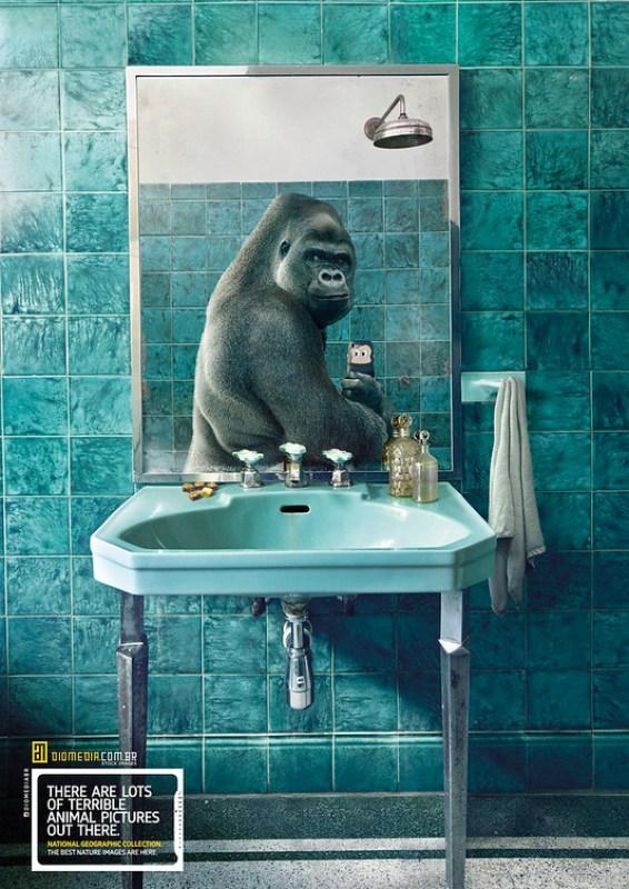 Diomedia - Gorilla