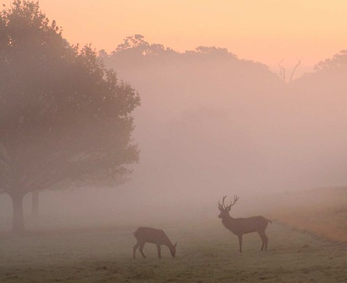 Early Morning in Richmond Park - Landscapes cover a wide range of different types of photography