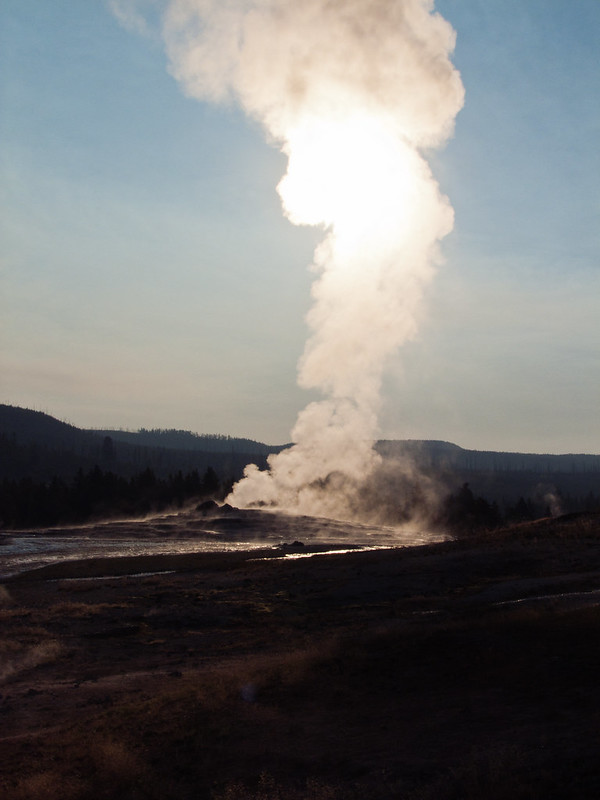 Stream rising from Old Faithful Geyser on an early morning, Yellowstone National Park