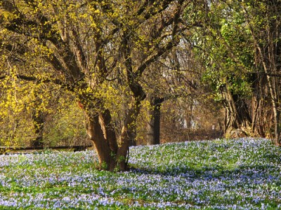 Blue Carpet under yellow Tree