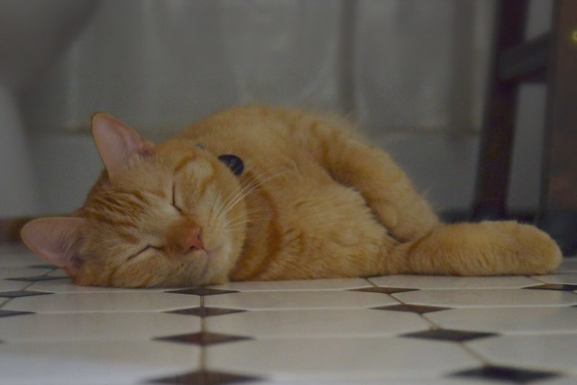 Catnap on a Cool Floor