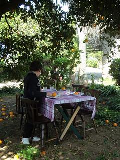 Sunday luch under the orange tree
