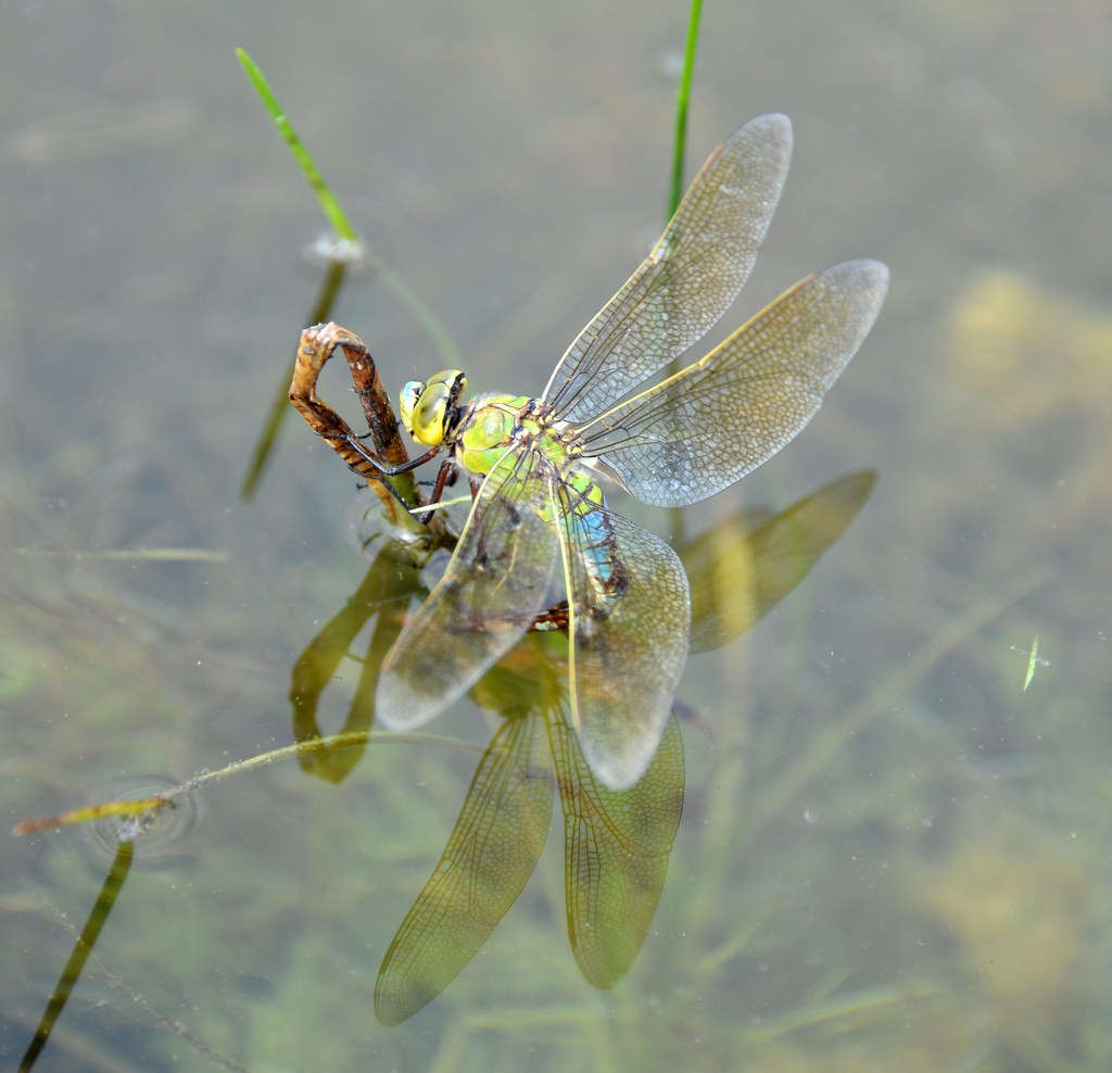 Dragonfly by Dirk Paessler