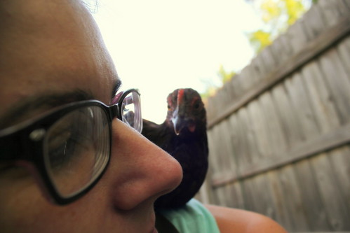 20120825. Little Red likes shoulder perching.