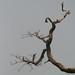 Trees in Nigeria - IMG_2354_CR2_v1