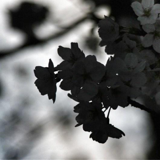 April 22, 2012 at 01:24AM