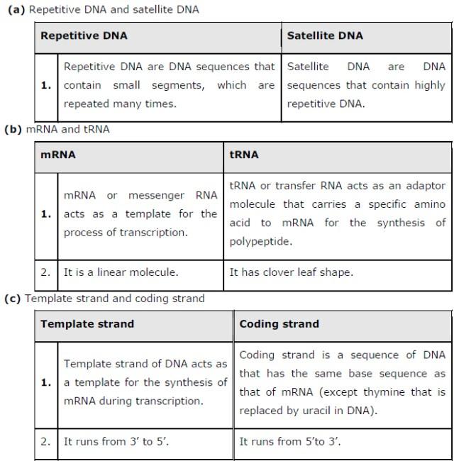 class 12 biology chapter 6 Molecular Basis of Inheritance