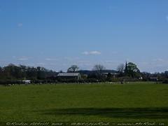 2012-04-05-Marfield-Wetlands-P4050005