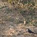 Parc National Des Deux Bale, Burkina Faso - IMG_1125_CR2_v1