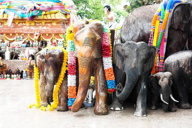 elephants, elephants