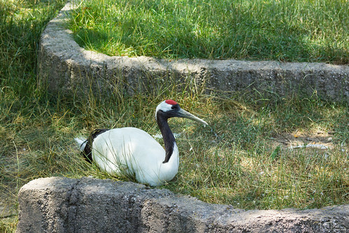 Red Crowned Crane by mypixelizedview