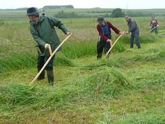 Scything in Scotland