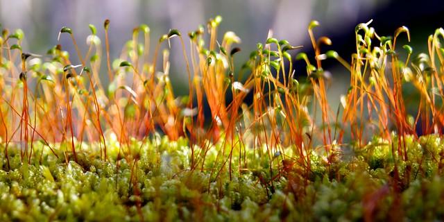 Moss on a Log