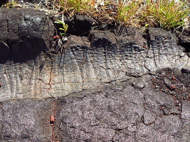 tree trunk in lava