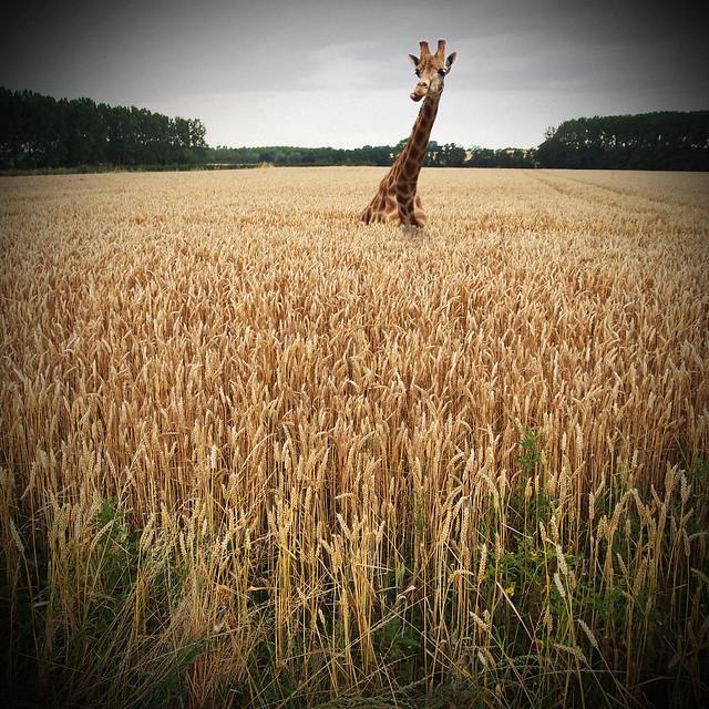 Harvest - Les moissons du ciel ! ;-)