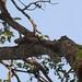 Parc National Des Deux Bale, Burkina Faso - IMG_1123_CR2_v1