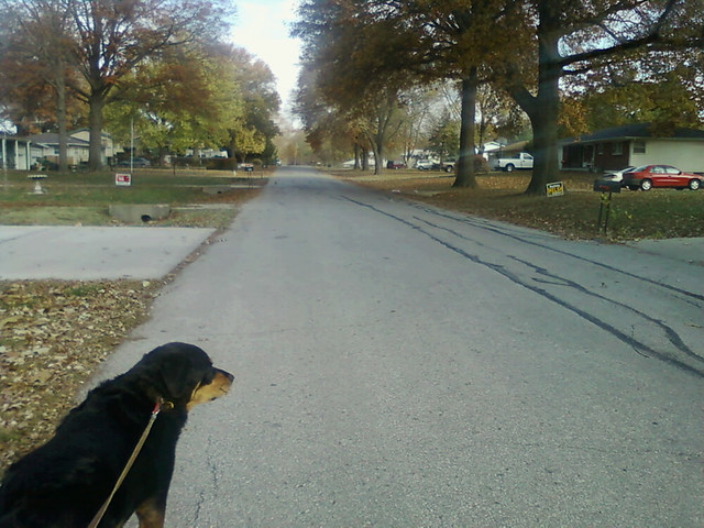 Sunday morning bracing autumn walk