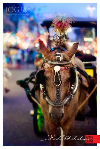 Malioboro horse by toing djayadiningrat