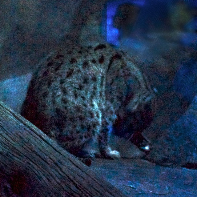 f/2.8 Fishing Cat