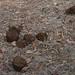 Parc National Des Deux Bale, Burkina Faso - IMG_1112_CR2_v1