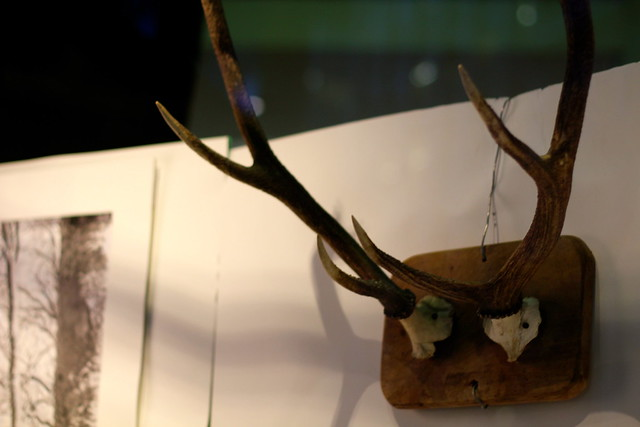 Monday: antlers in the library