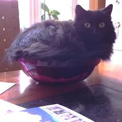 cat-salad-for-catou