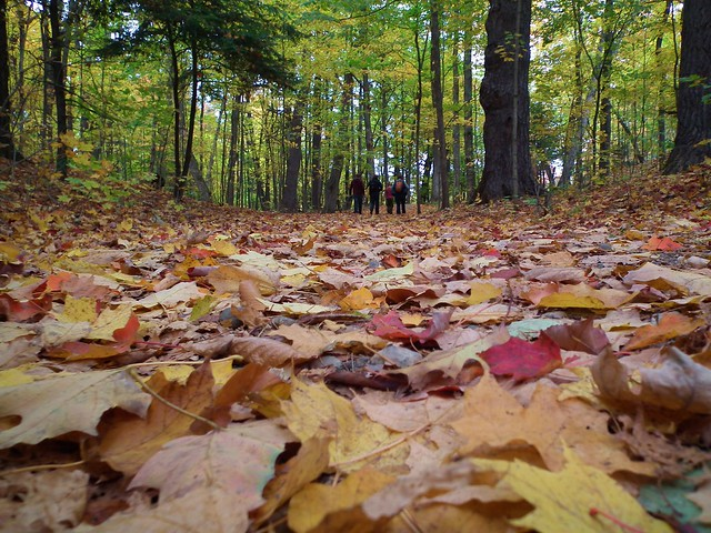 autumn in Gatineau Park