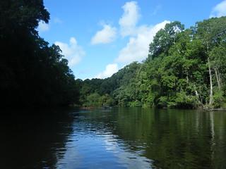Edisto River Scenery