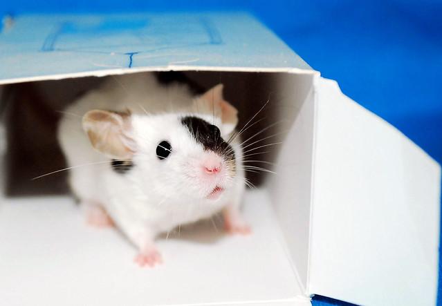 """""""Am I cutest Mouse ever?"""" ~ Fruzia"""