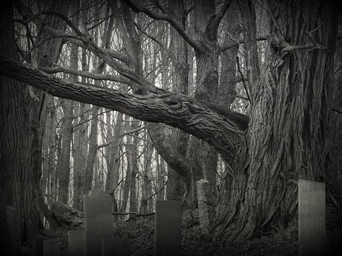 RSiegel_Week44 - Resting Place