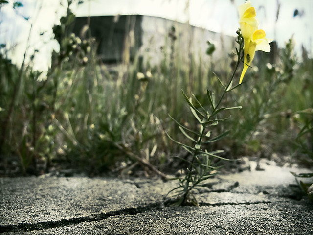 flower-in-concrete